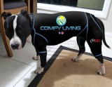 CANINE COMPRESSION ANXIETY SUIT AMERICAN STAFFY