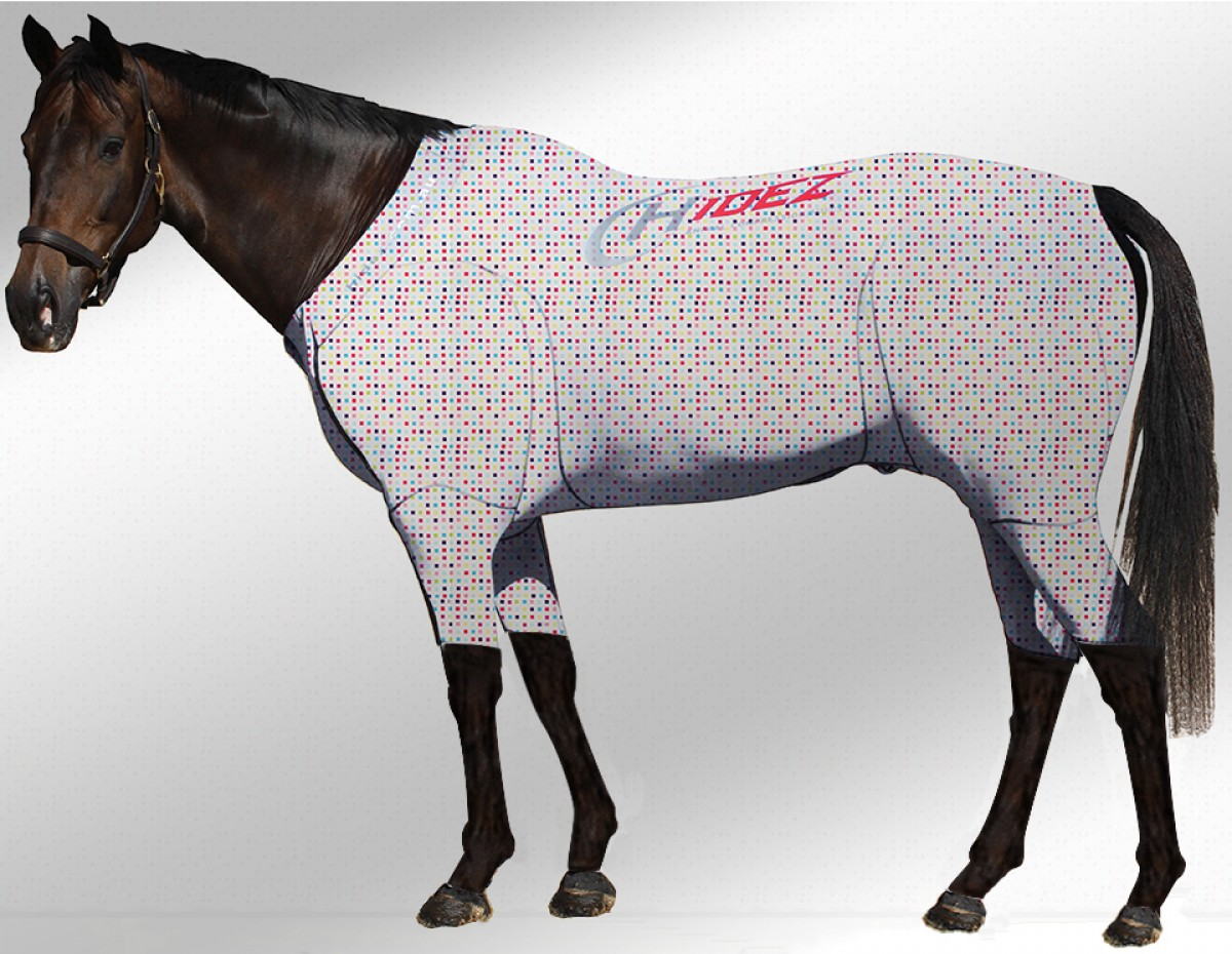 EQUINE ACTIVE  SUIT PRINTED