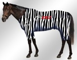 EQUINE-ACTIVE-SUIT-PRINTED-ZEBRA