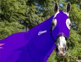 EQUINE COMPRESSION NECK PURPLE