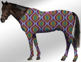 EQUINE SUIT PRINTED SEAMLESS