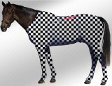 EQUINE SUIT PRINTED CHECKERED