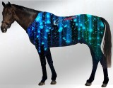 EQUINE SUIT PRINTED NIGHT ROCKS