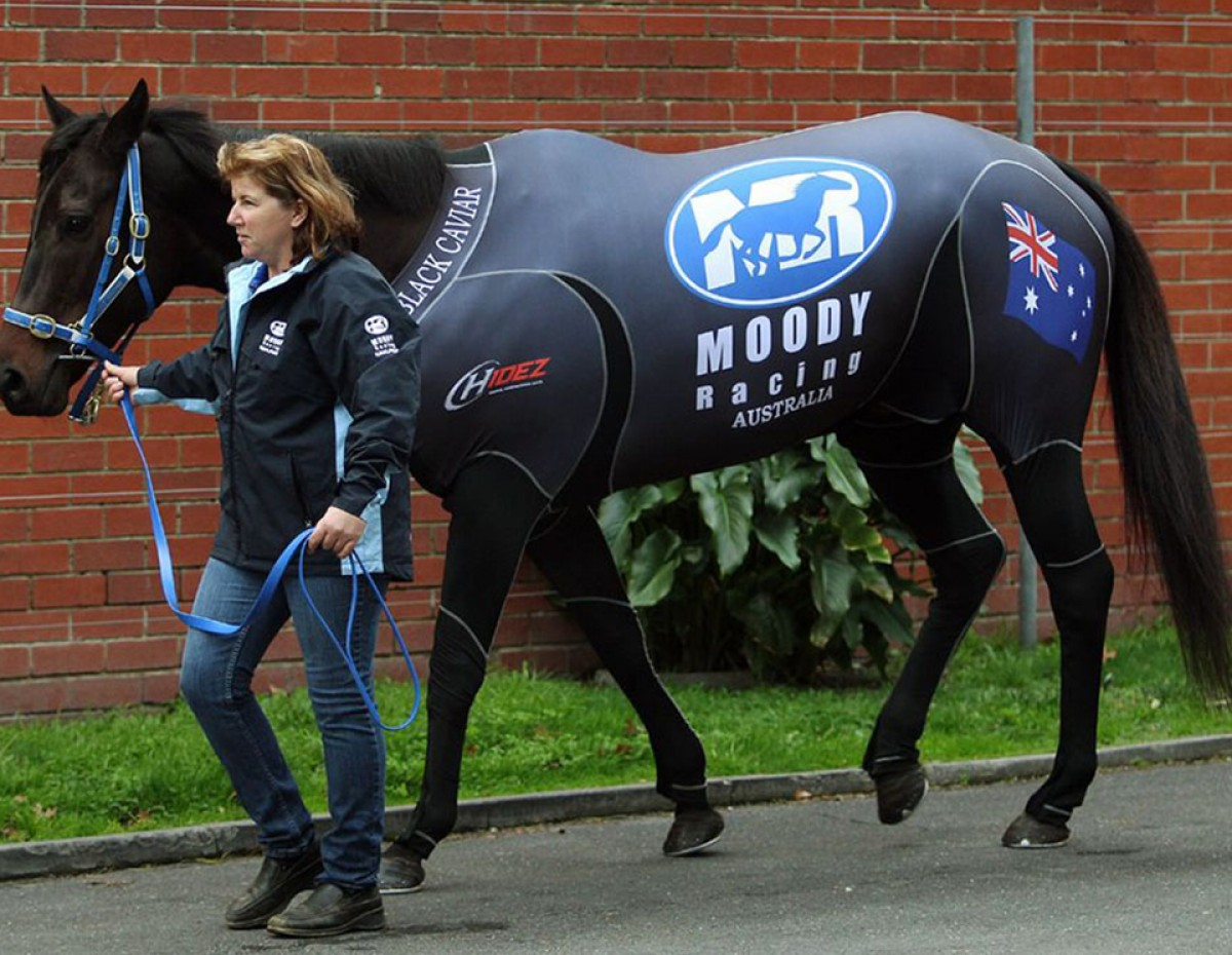 BLACK CAVIAR WITH HANDLER