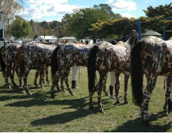 CUSTOM SUIT OR 6 HORSE CAMO SUIT ROWES LAGOON