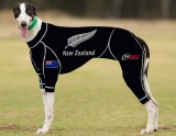 RACING-SUIT-PRINTED-NEW-ZEALAND