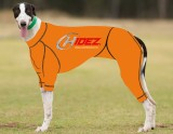 RACING-SUIT-PRINTED-ORANGE