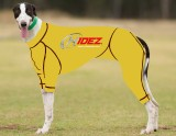 RACING-SUIT-PRINTED-YELLOW